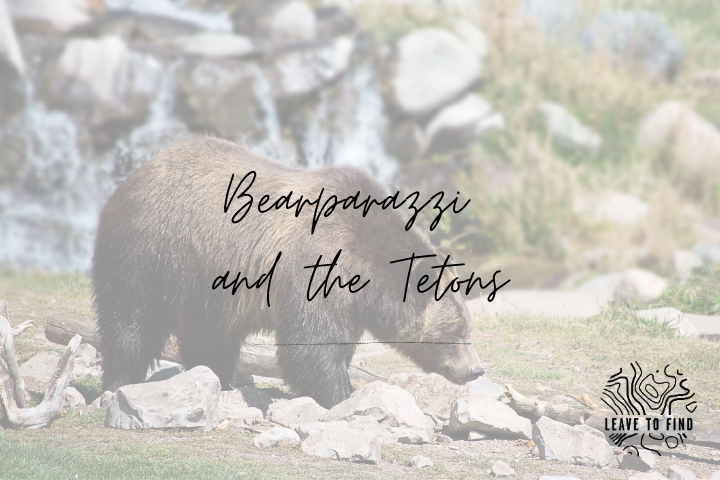 Bearparazzi and the Tetons
