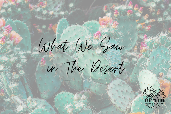 What We Saw In The Desert